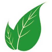 sertleşmeye-faydalı-gelen-bitkiler